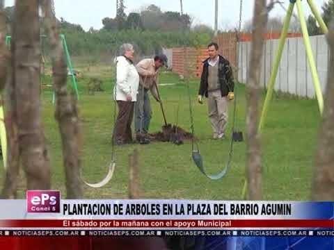 PLANTACION DE ARBOLES EN LA PLAZA DEL BARRIO AGUMIN