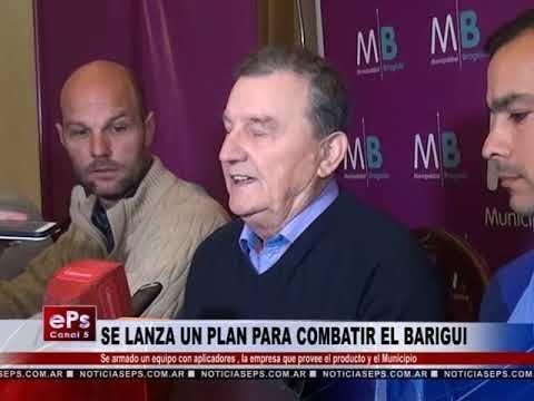 SE LANZA UN PLAN PARA COMBATIR EL BARIGUI