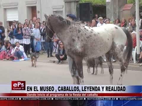 EN EL MUSEO , CABALLOS, LEYENDA Y REALIDAD