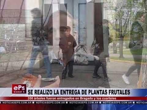 SE REALIZO LA ENTREGA DE PLANTAS FRUTALES
