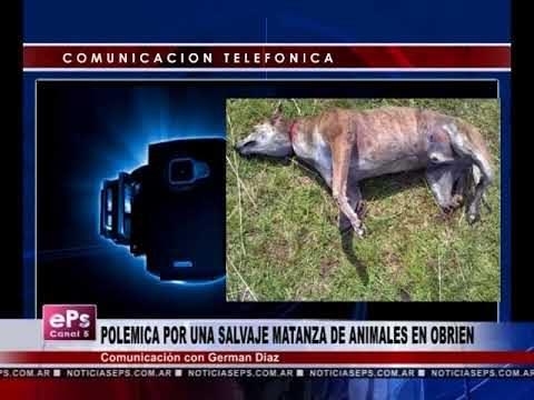 POLEMICA POR UNA SALVAJE MATANZA DE ANIMALES EN OBRIEN
