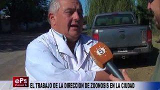 EL TRABAJO DE LA DIRECCION DE ZOONOSIS EN LA CIUDAD