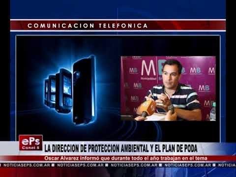 LA DIRECCION DE PROTECCION AMBIENTAL Y EL PLAN DE PODA