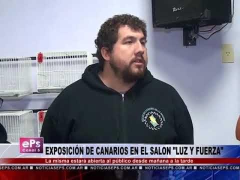 EXPOSICIÓN DE CANARIOS EN EL SALON LUZ Y FUERZA