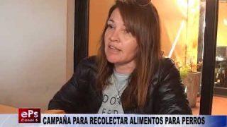 CAMPAÑA PARA RECOLECTAR ALIMENTOS PARA PERROS