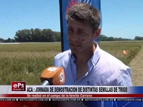 ACA REALIZO UNA JORNADA DE DEMOSTRACION DE DISTINTAS SEMILLAS DE TRIGO