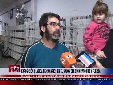 EXPOSICIÓN CLASICA DE CANARIOS EN EL SALÓN DEL SINDICATO LUZ Y FUERZA