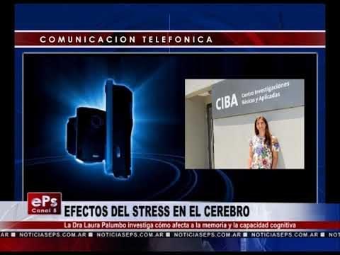 EFECTOS DEL STRESS EN EL CEREBRO